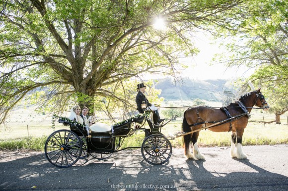 Wedding Horse & Carriage